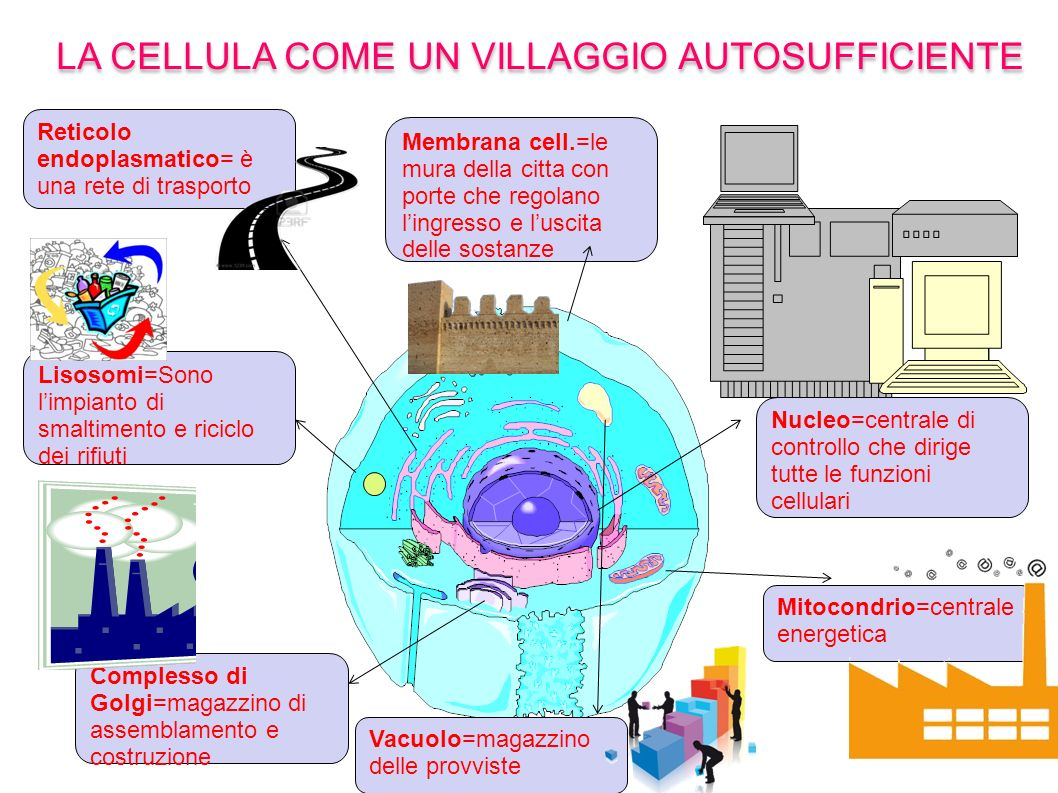 LA CELLULA COME UN VILLAGGIO AUTOSUFFICIENTE