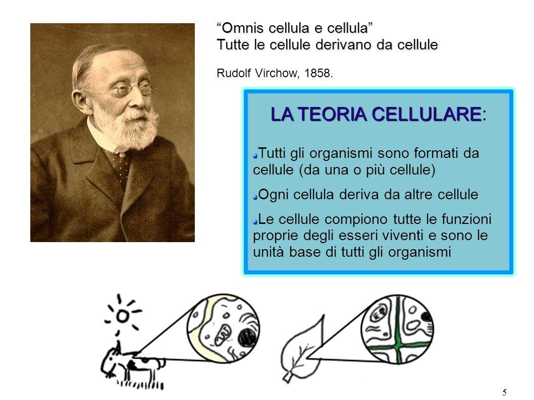 LA TEORIA CELLULARE: Omnis cellula e cellula