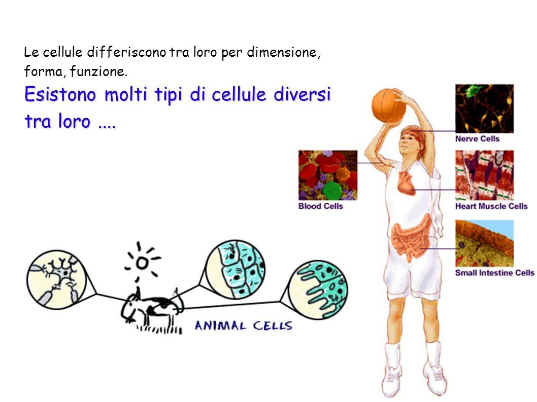 Esistono molti tipi di cellule diversi tra loro ....