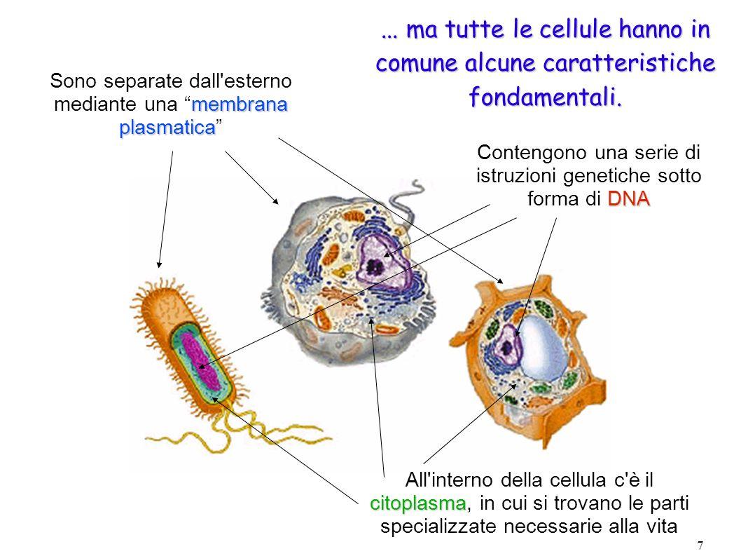 ... ma tutte le cellule hanno in comune alcune caratteristiche fondamentali.