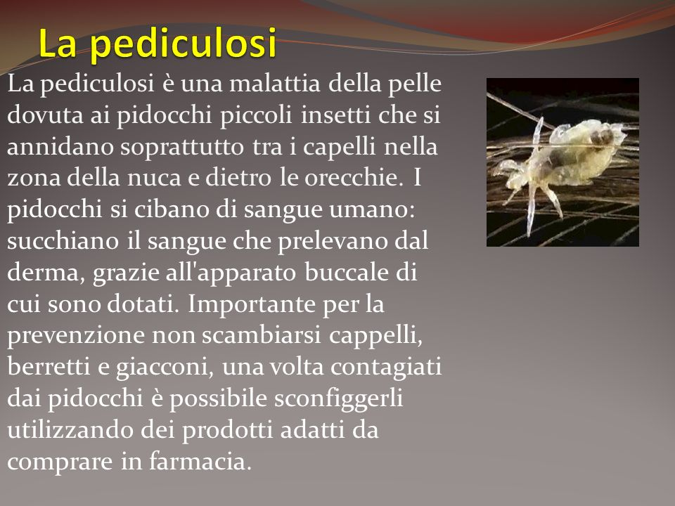 La pediculosi