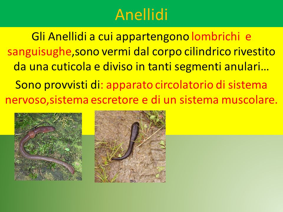 Anellidi