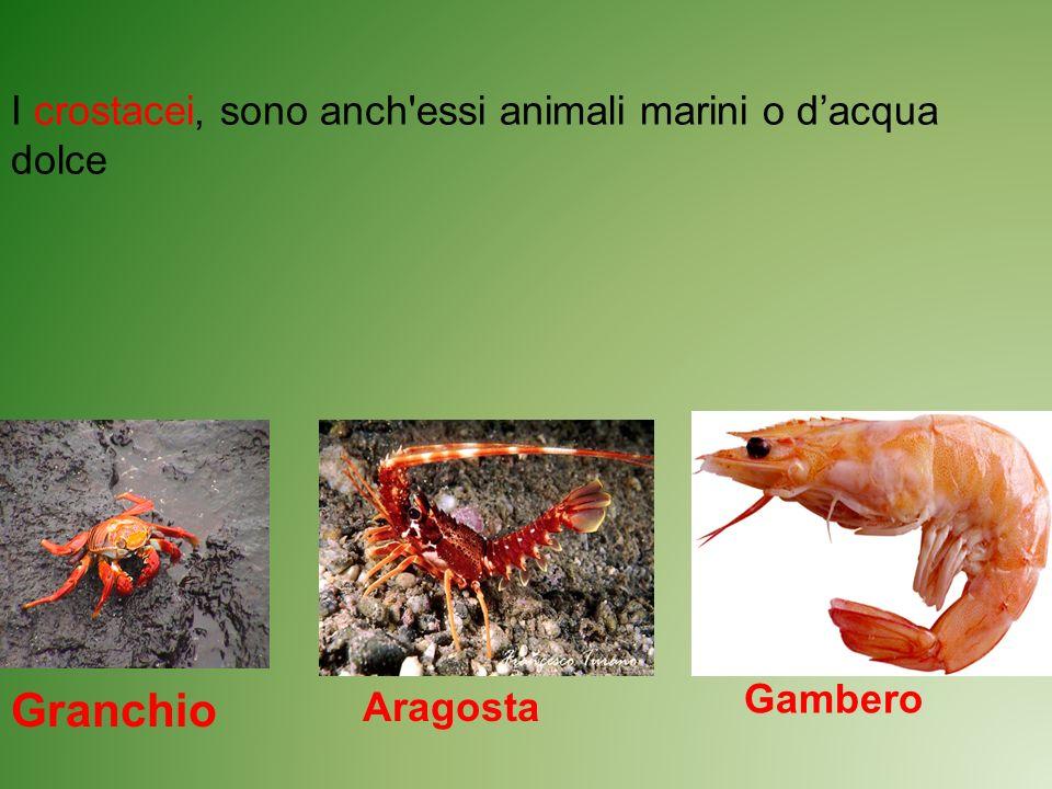 Granchio I crostacei, sono anch essi animali marini o d'acqua dolce