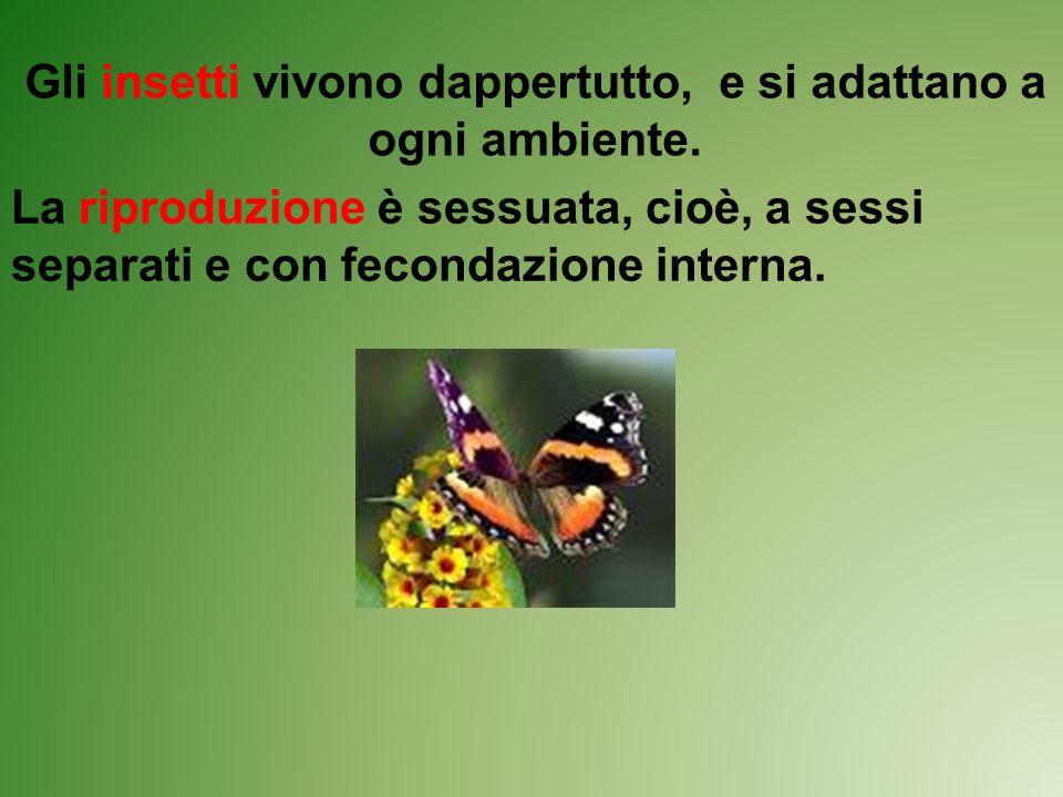 Gli insetti vivono dappertutto, e si adattano a ogni ambiente.