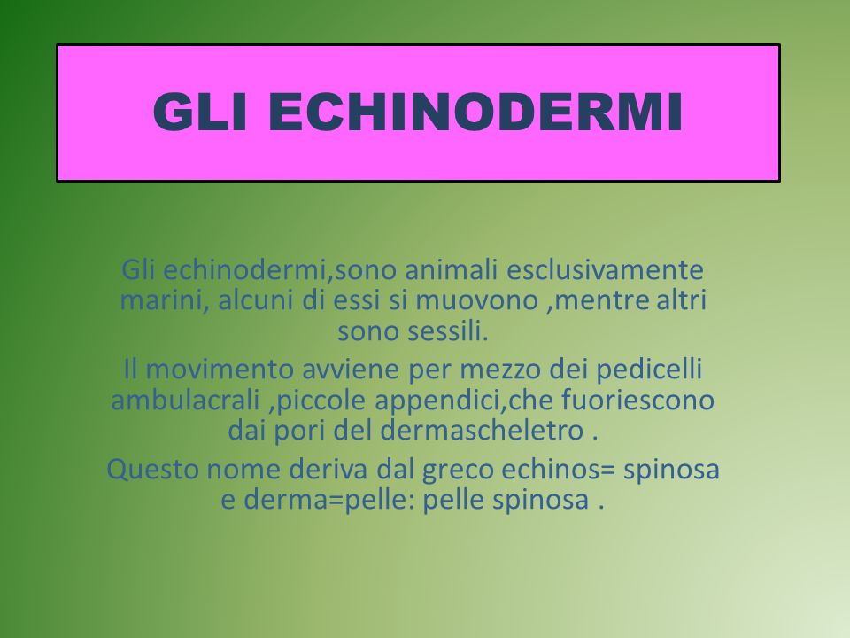 GLI ECHINODERMI Gli echinodermi,sono animali esclusivamente marini, alcuni di essi si muovono ,mentre altri sono sessili.