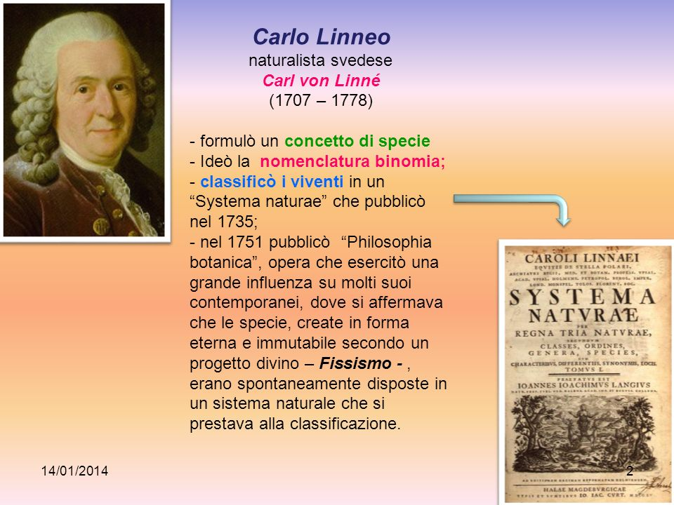 naturalista svedese Carl von Linné