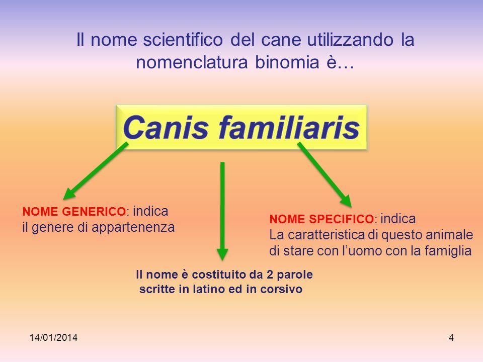 Il nome scientifico del cane utilizzando la nomenclatura binomia è…