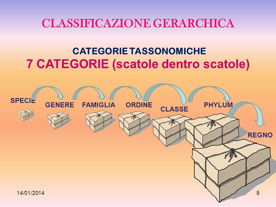 CLASSIFICAZIONE GERARCHICA