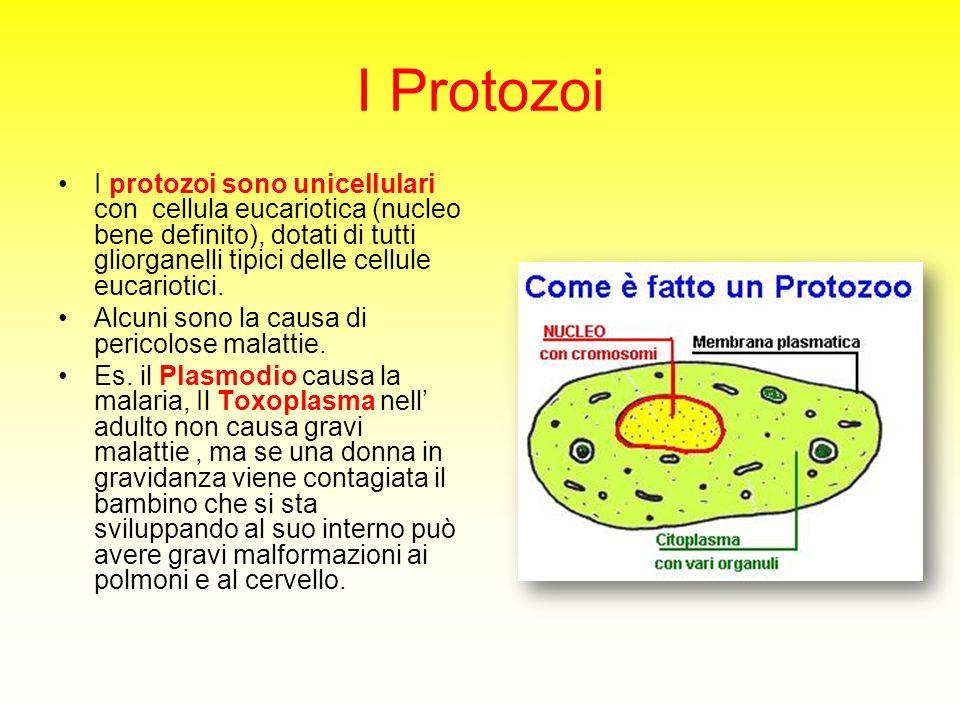 I Protozoi