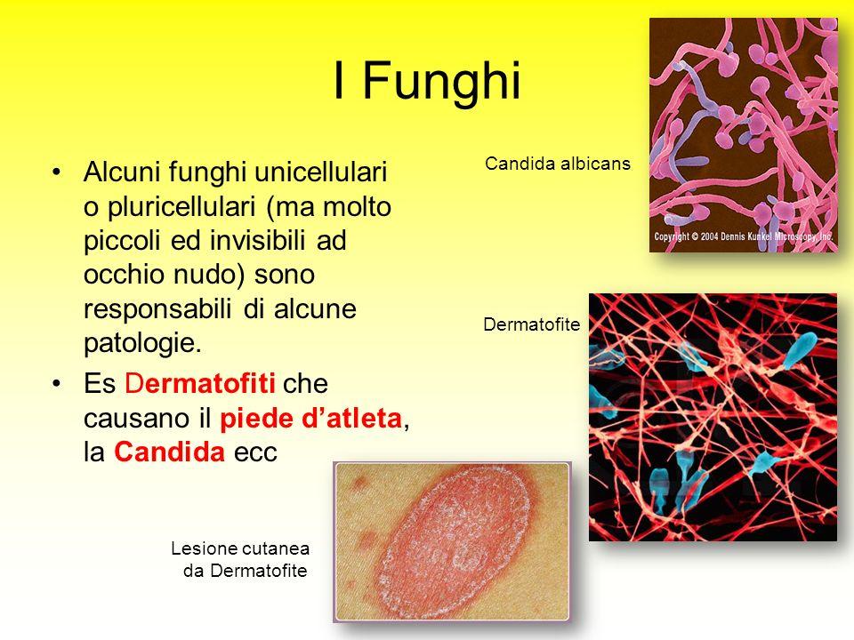 I Funghi Candida albicans.