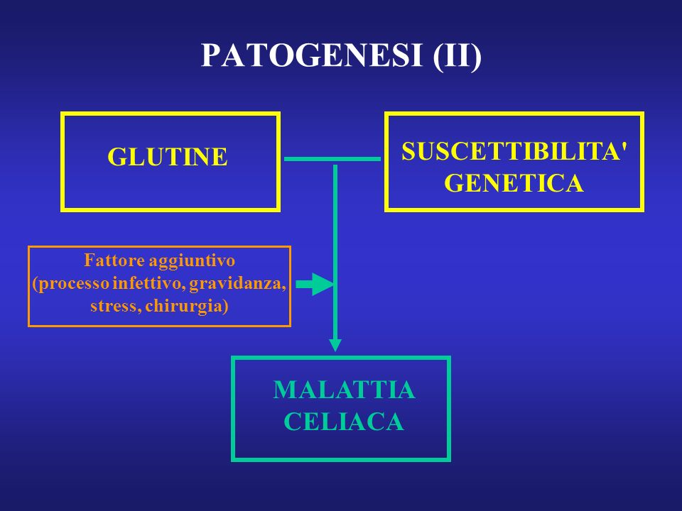 PATOGENESI (II) SUSCETTIBILITA GENETICA GLUTINE MALATTIA CELIACA