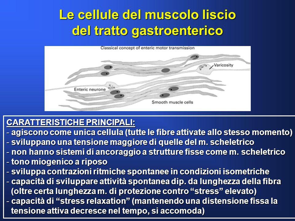 Le cellule del muscolo liscio del tratto gastroenterico