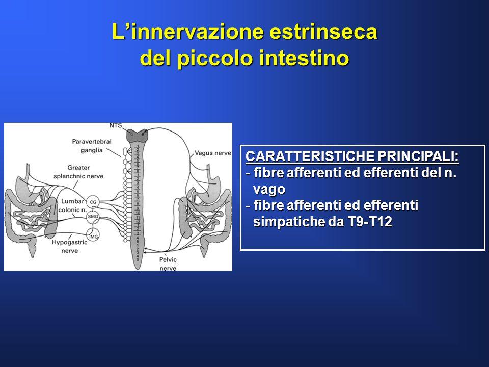 L'innervazione estrinseca del piccolo intestino