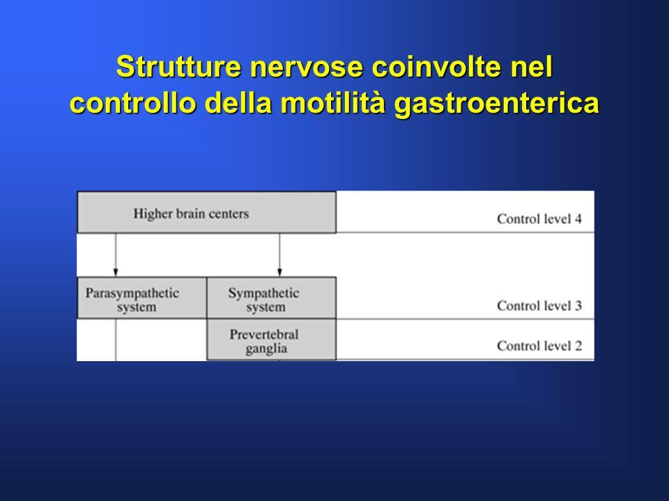 Strutture nervose coinvolte nel controllo della motilità gastroenterica