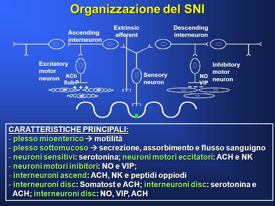 Organizzazione del SNI