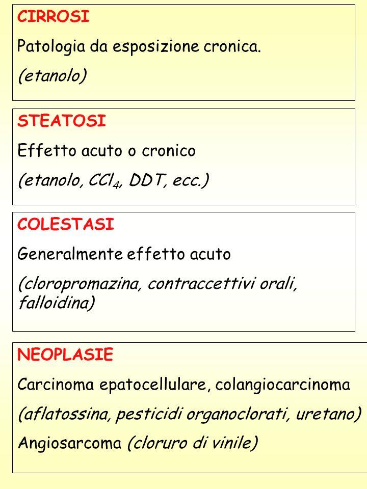 CIRROSI Patologia da esposizione cronica. (etanolo) STEATOSI. Effetto acuto o cronico. (etanolo, CCl4, DDT, ecc.)