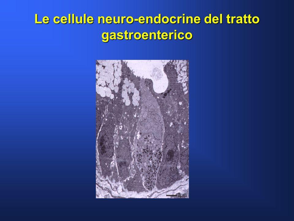 Le cellule neuro-endocrine del tratto gastroenterico