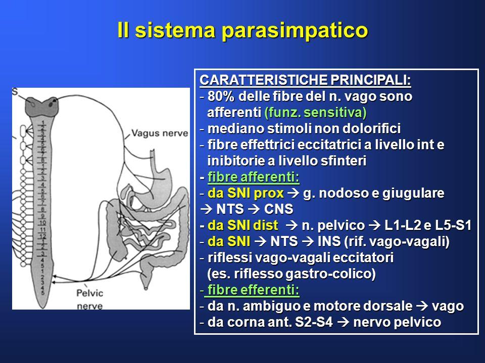 Il sistema parasimpatico