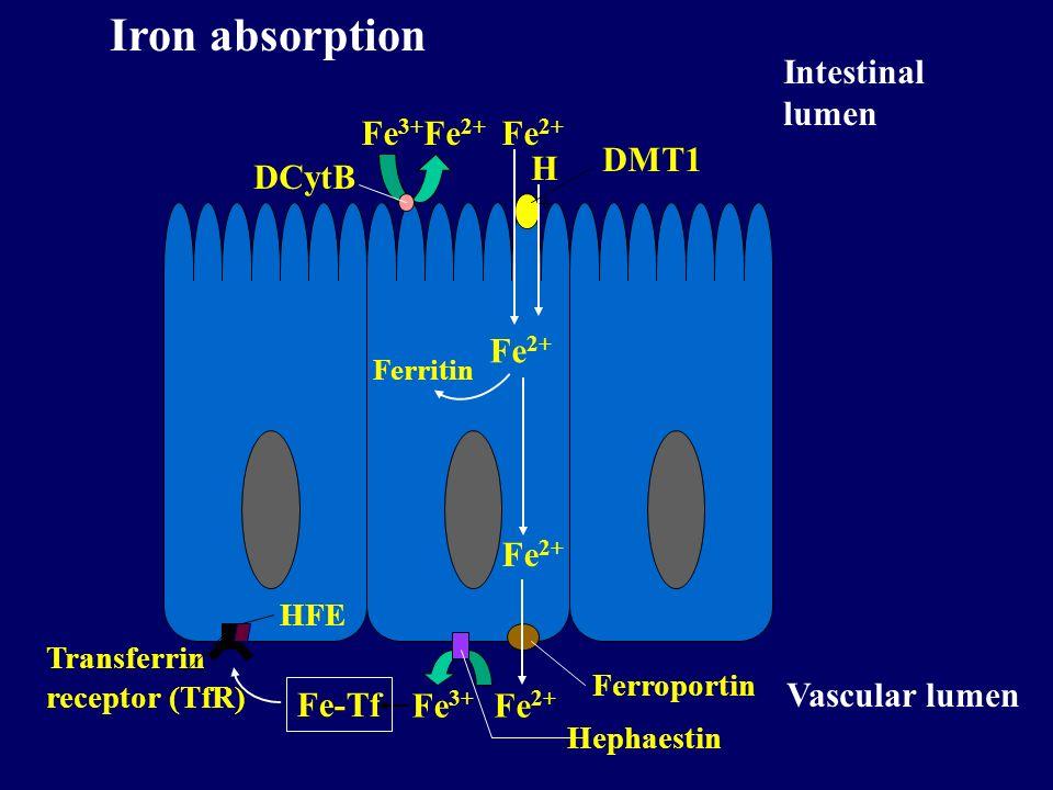 Iron absorption Intestinal lumen Fe3+ Fe2+ DCytB Fe2+ H+ DMT1 Fe2+