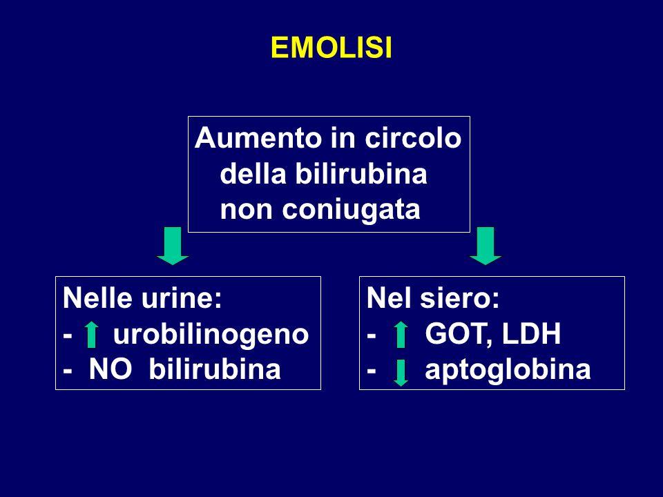 EMOLISI Aumento in circolo della bilirubina non coniugata. Nelle urine: - urobilinogeno - NO bilirubina.