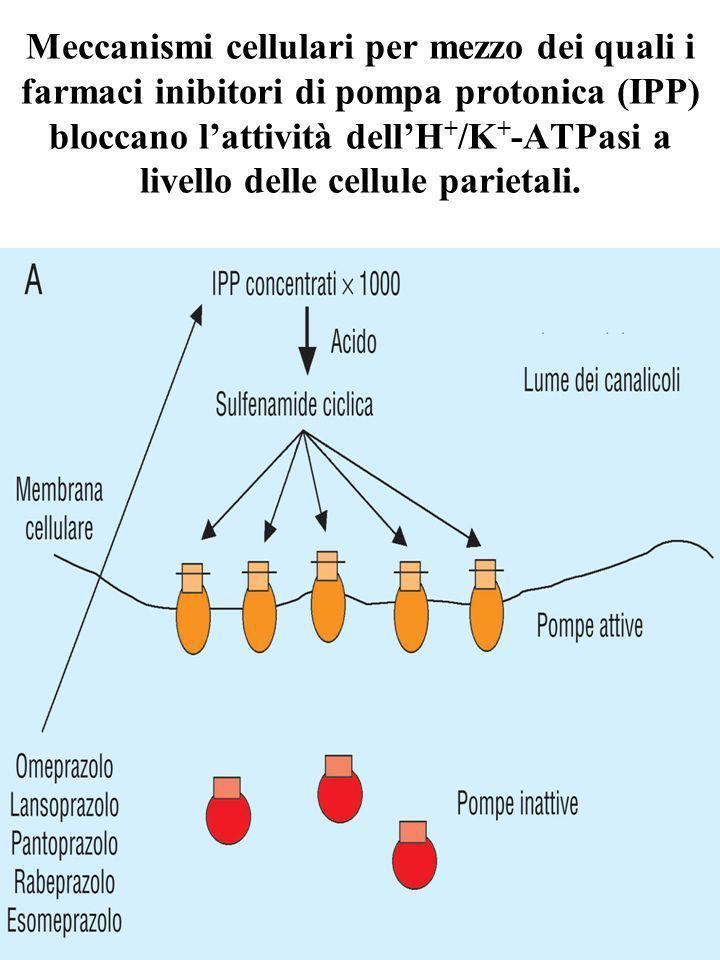 Meccanismi cellulari per mezzo dei quali i farmaci inibitori di pompa protonica (IPP) bloccano l'attività dell'H+/K+-ATPasi a livello delle cellule parietali.
