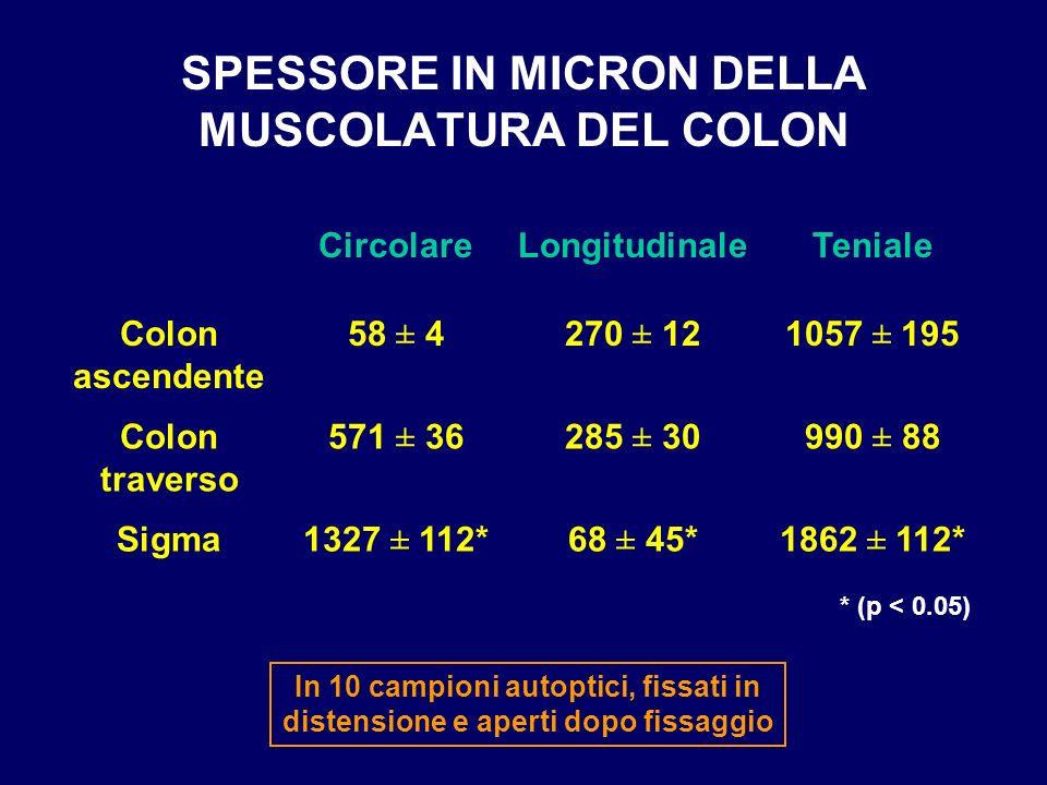 SPESSORE IN MICRON DELLA MUSCOLATURA DEL COLON