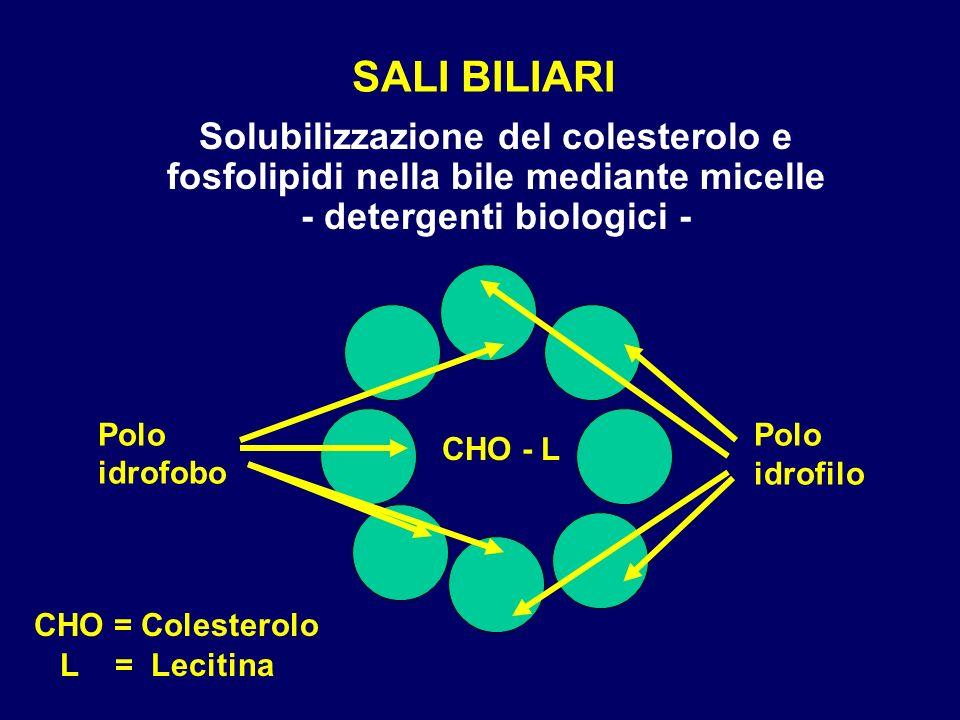 SALI BILIARISolubilizzazione del colesterolo e fosfolipidi nella bile mediante micelle - detergenti biologici -
