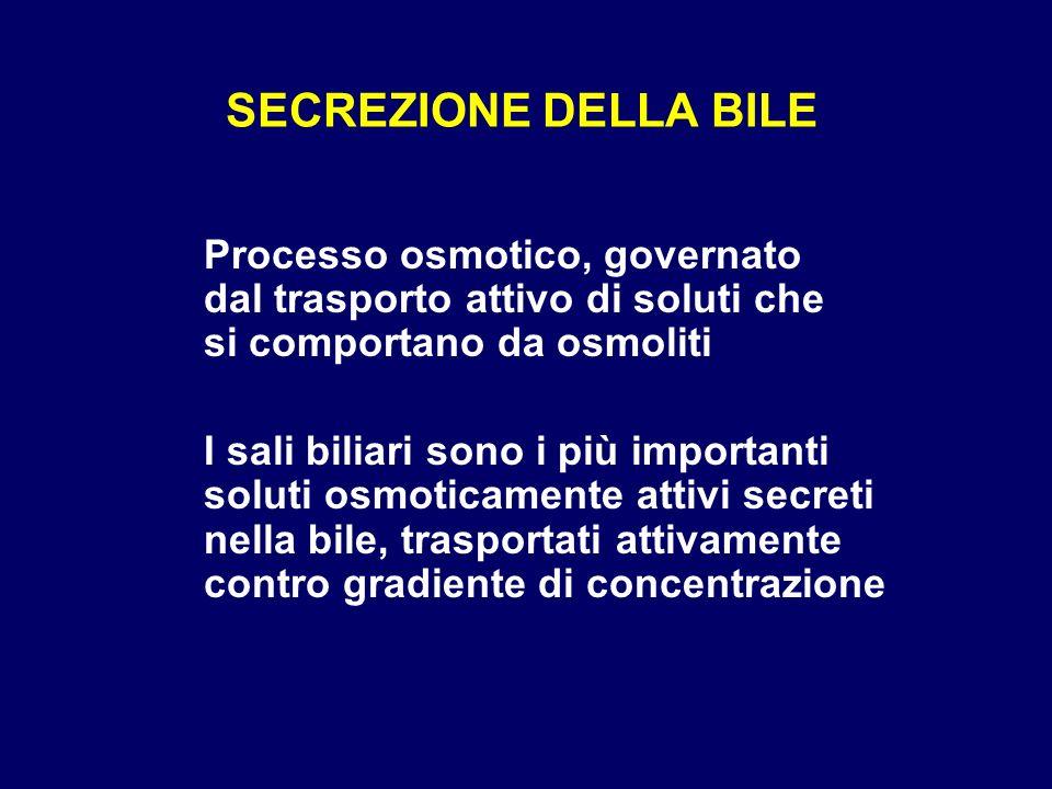 SECREZIONE DELLA BILE Processo osmotico, governato dal trasporto attivo di soluti che si comportano da osmoliti.