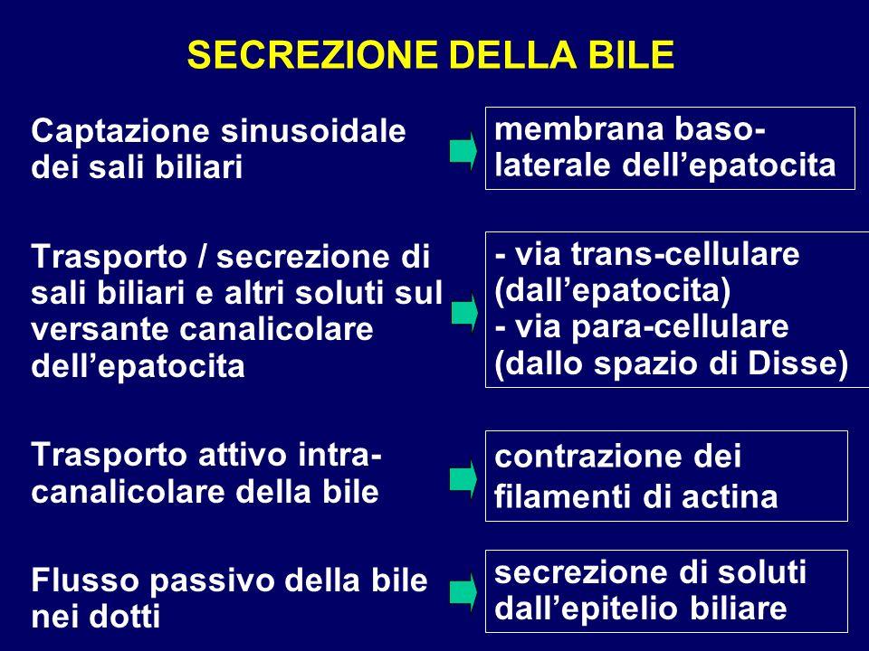 SECREZIONE DELLA BILE Captazione sinusoidale dei sali biliari