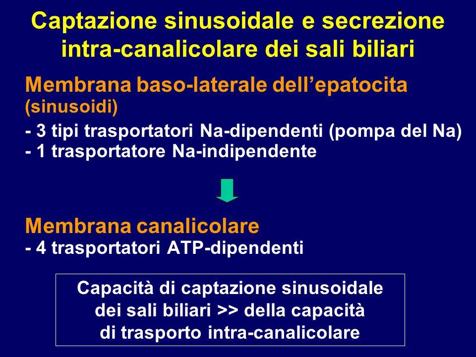 Captazione sinusoidale e secrezione intra-canalicolare dei sali biliari