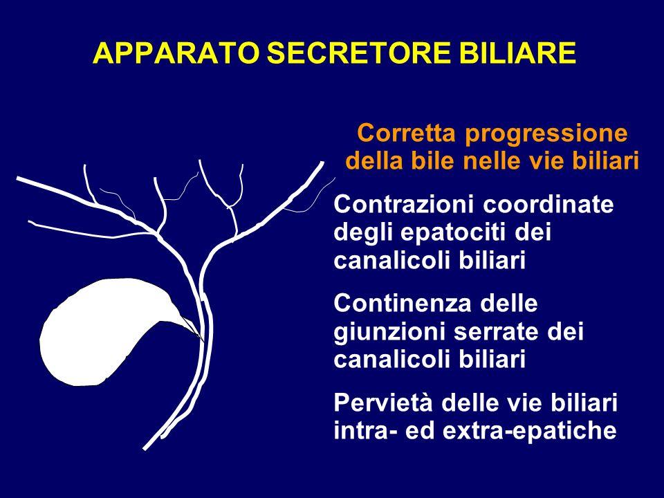 APPARATO SECRETORE BILIARE