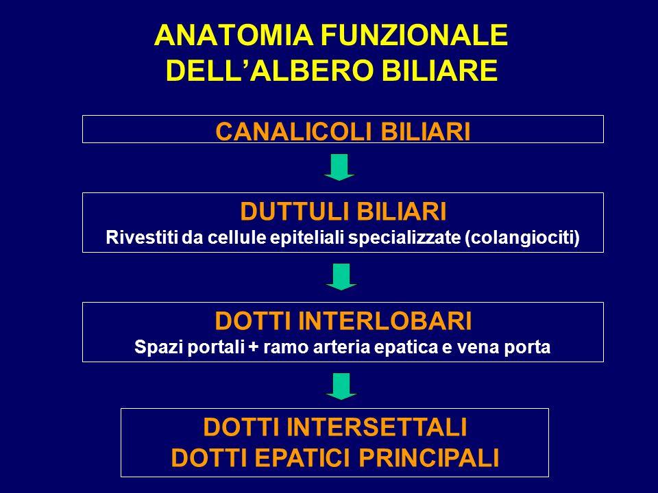 ANATOMIA FUNZIONALE DELL'ALBERO BILIARE