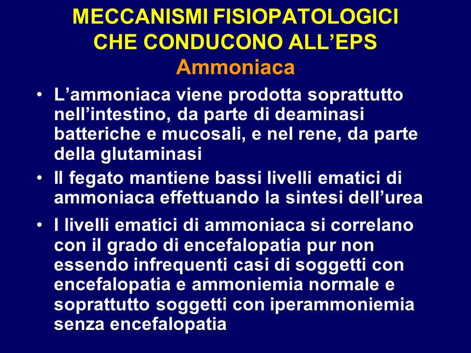 MECCANISMI FISIOPATOLOGICI CHE CONDUCONO ALL'EPS Ammoniaca