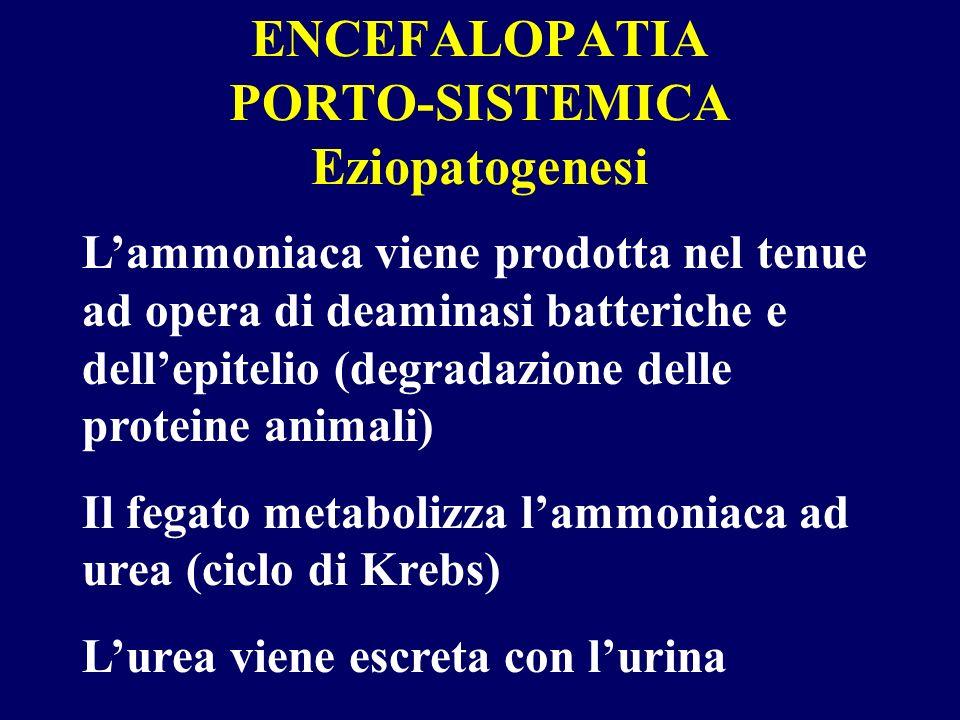 ENCEFALOPATIA PORTO-SISTEMICA Eziopatogenesi