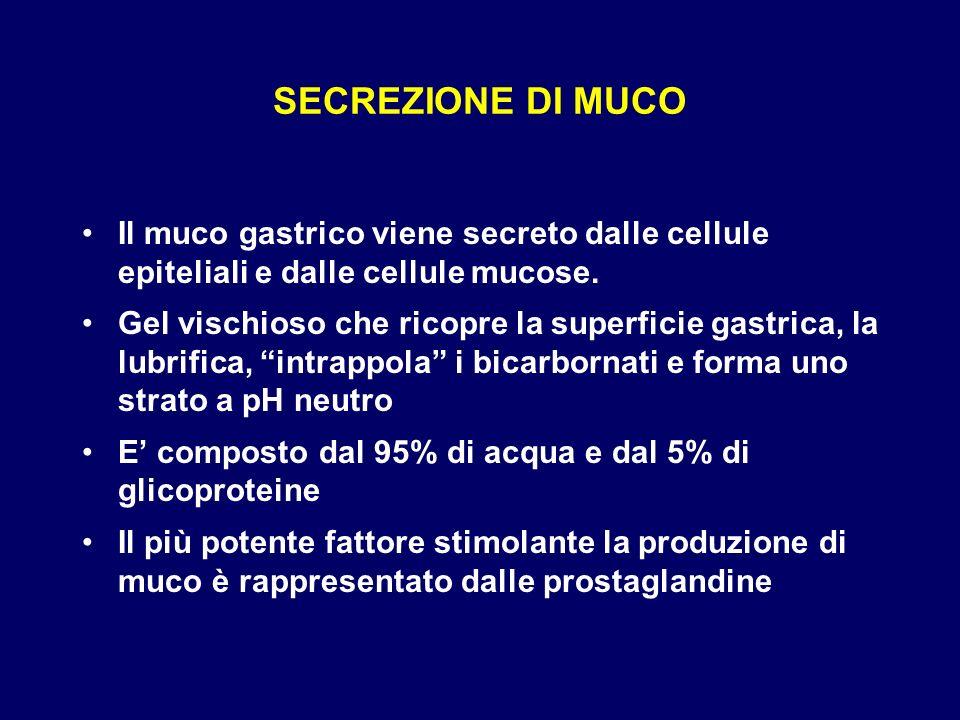 SECREZIONE DI MUCO Il muco gastrico viene secreto dalle cellule epiteliali e dalle cellule mucose.