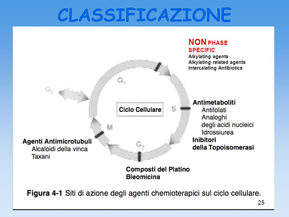 CLASSIFICAZIONE NON PHASE SPECIFIC Alkylating agents