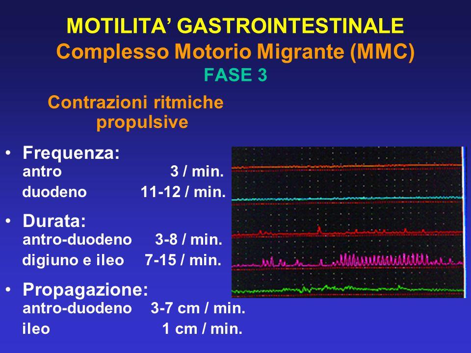 MOTILITA' GASTROINTESTINALE Complesso Motorio Migrante (MMC) FASE 3