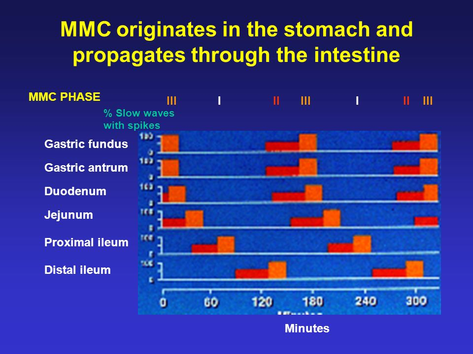 MMC originates in the stomach and propagates through the intestine
