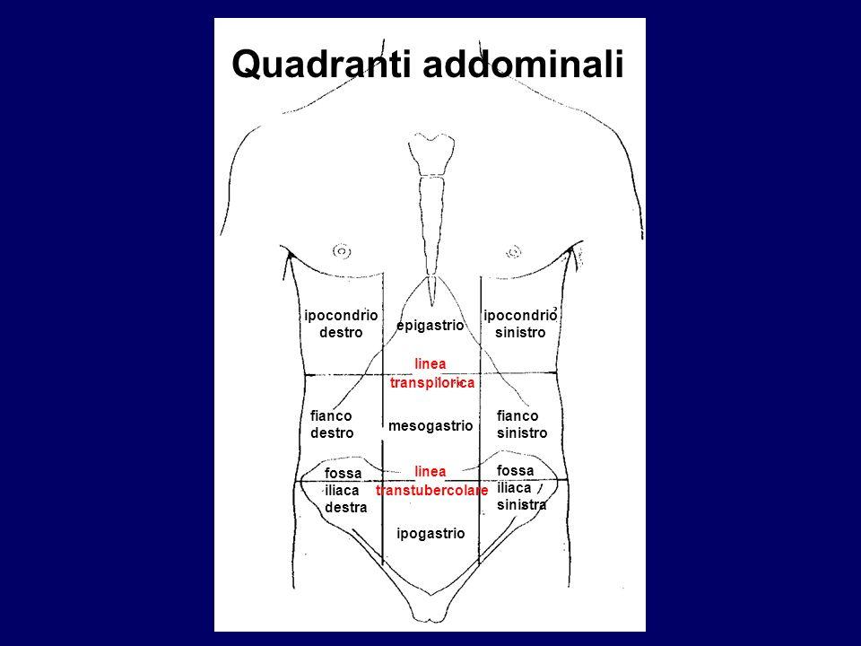 Quadranti addominali ipocondrio destro ipocondrio sinistro epigastrio