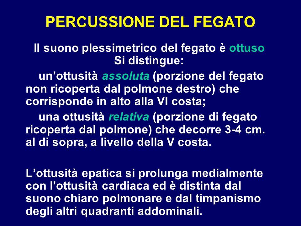 PERCUSSIONE DEL FEGATO