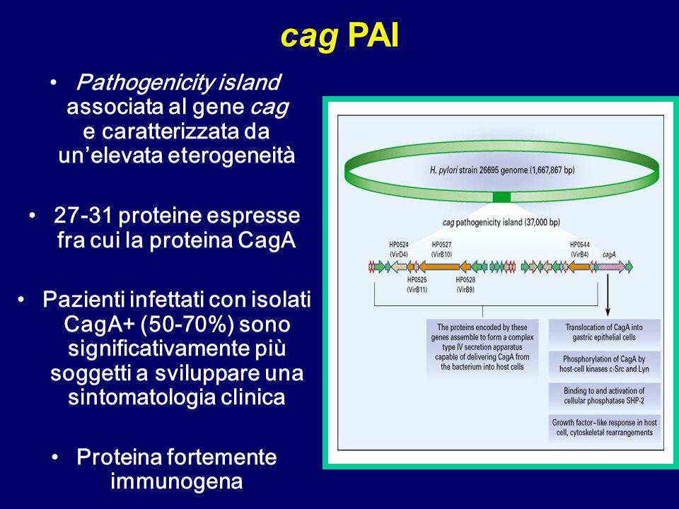 cag PAI Pathogenicity island associata al gene cag e caratterizzata da un'elevata eterogeneità.