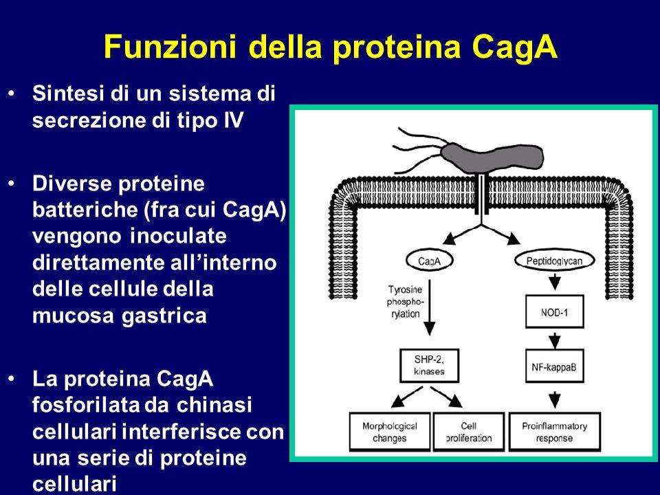 Funzioni della proteina CagA