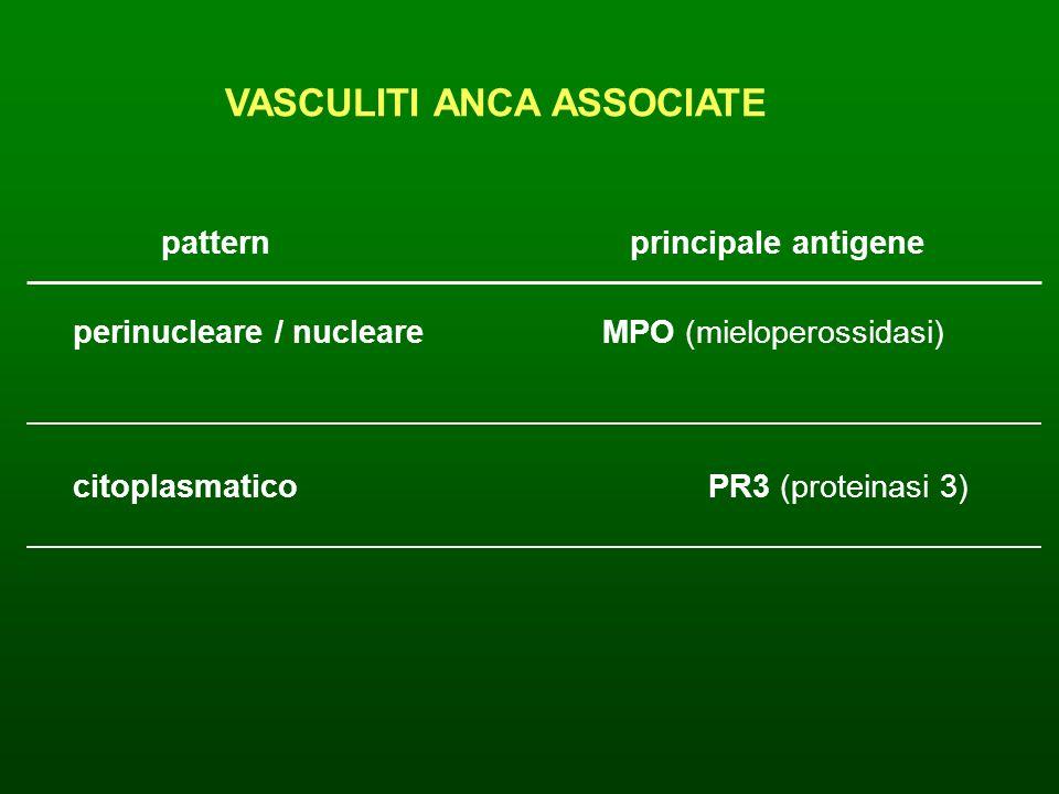 VASCULITI ANCA ASSOCIATE pattern principale antigene