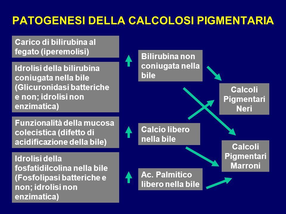PATOGENESI DELLA CALCOLOSI PIGMENTARIA