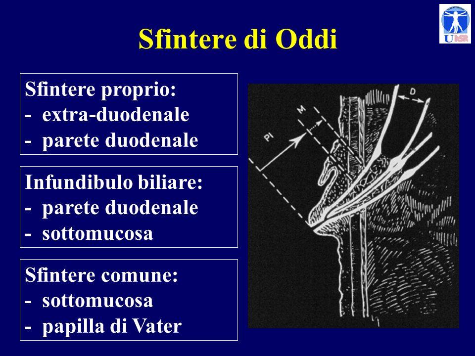 Sfintere di Oddi Sfintere proprio: - extra-duodenale - parete duodenale.