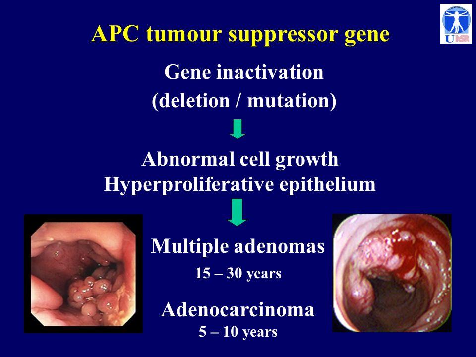 APC tumour suppressor gene