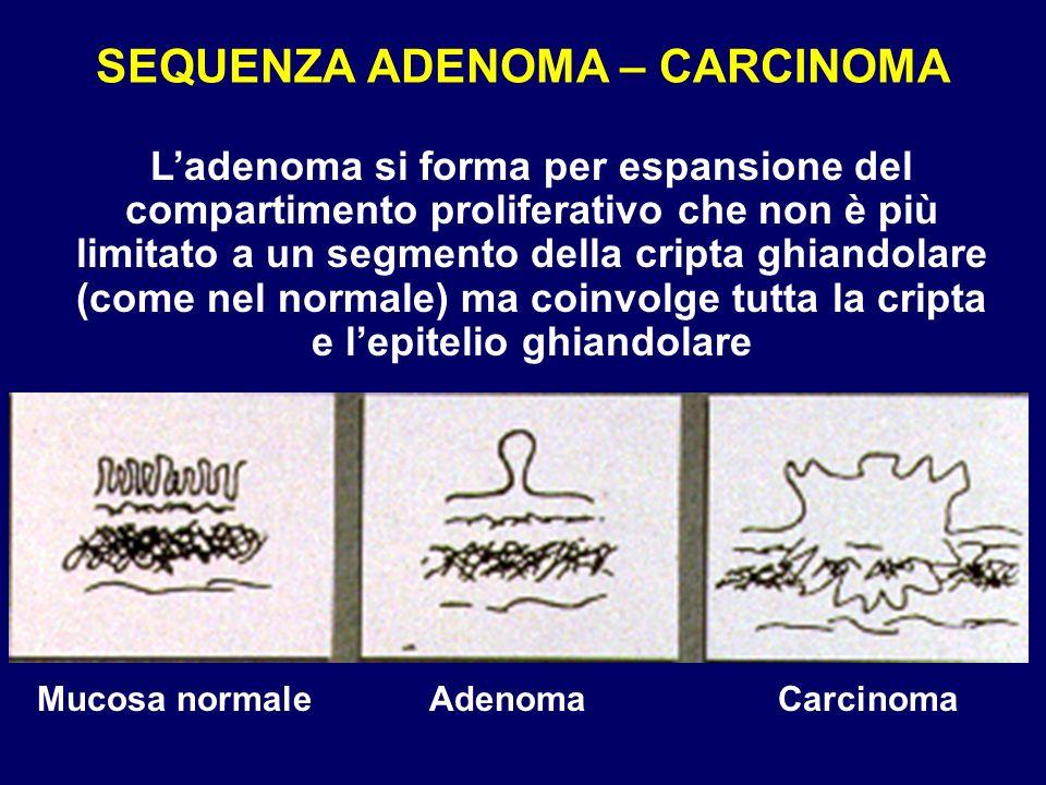 SEQUENZA ADENOMA – CARCINOMA
