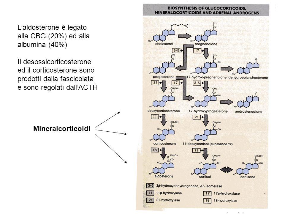 L'aldosterone è legato