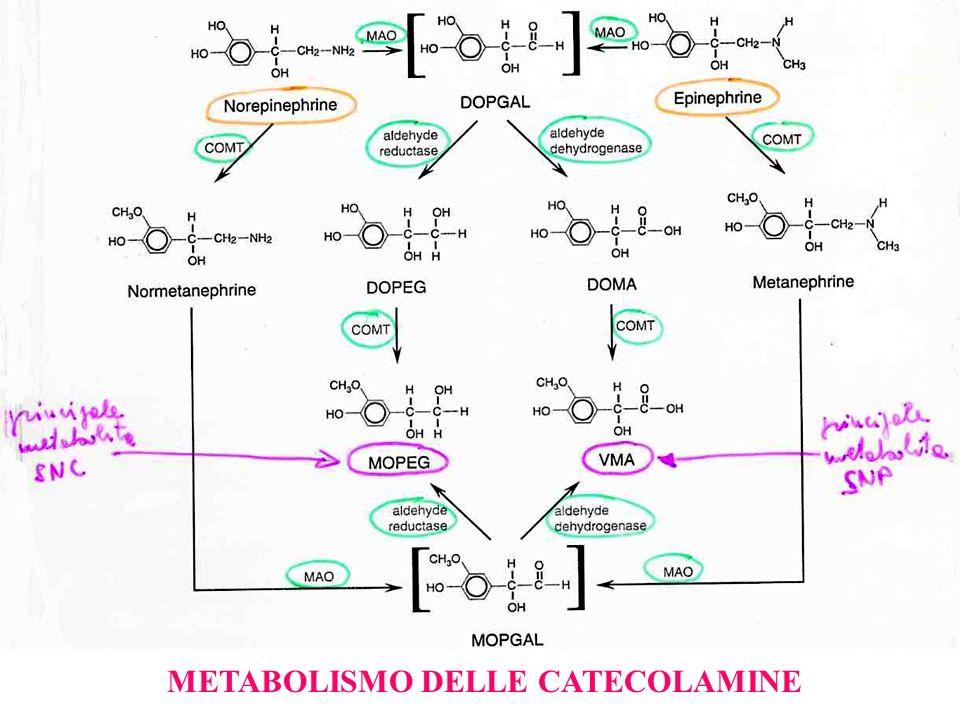 METABOLISMO DELLE CATECOLAMINE