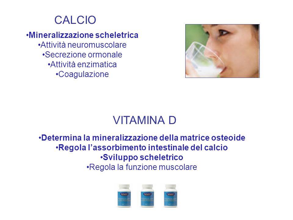CALCIO VITAMINA D Mineralizzazione scheletrica Attività neuromuscolare